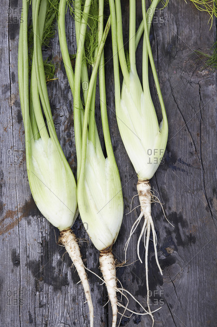 Fennel bulbs and stems on wooden table