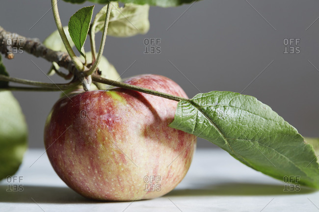 Close up of apple with stem and leaf