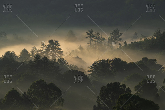 USA, Georgia, Silhouettes of trees covered with fog at sunrise, Blue Ridge Mountains