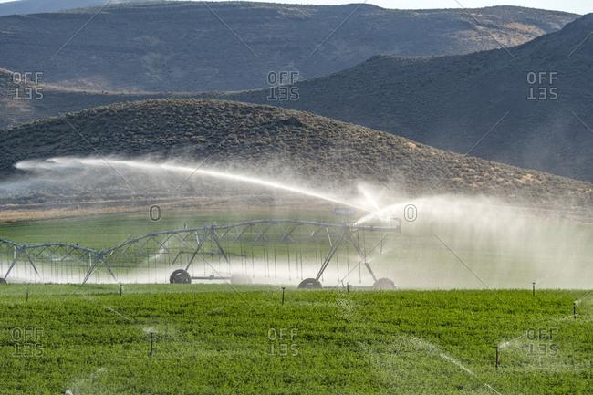 USA, Idaho, Bellevue, Center pivot irrigation system sprinkling water in field