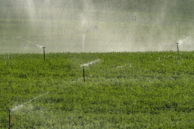 USA, Idaho, Bellevue, Sprinklers in field
