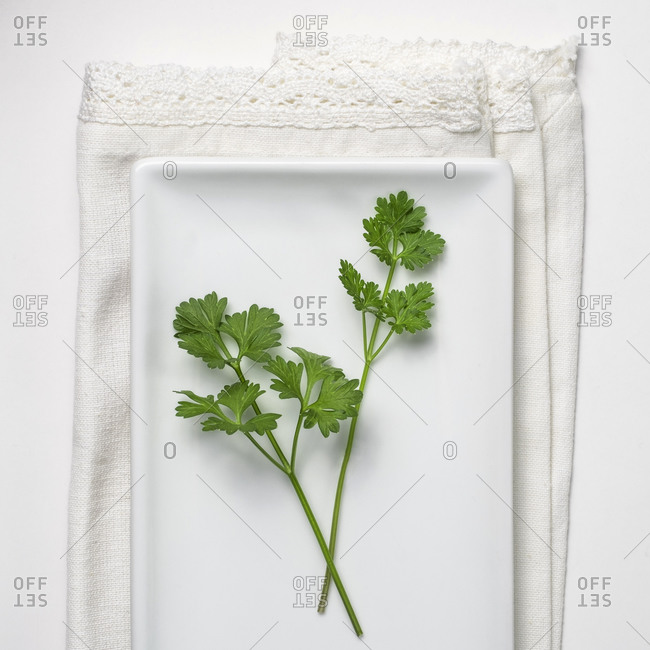 Close-up of Parsley on white background