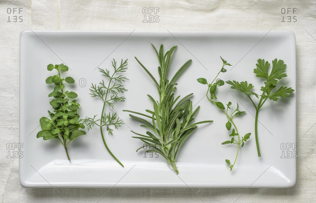 Close-up of Herbs on white plate