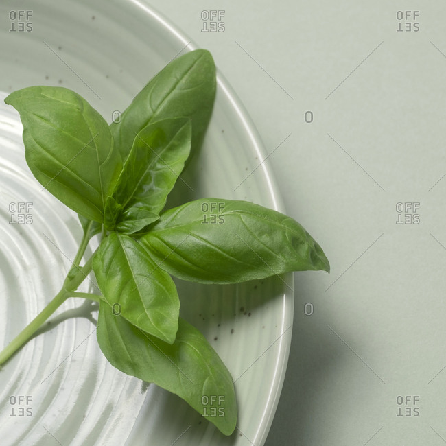 Close-up of Basil on plate
