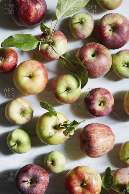 Close-up of Freshly harvested apples