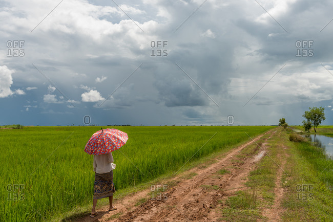 SIEM REAP, CAMBODIA - 2014 October 25: Local lady walks through paddy fields using umbrella as shade from the sun.