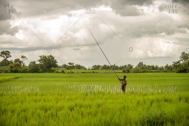KOMPONG THOM, CAMBODIA - 2013 August 15: Local farmer uses fishing rod to catch frogs in paddy fields.