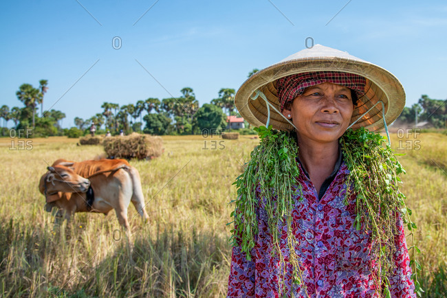 KOMPONG THOM, CAMBODIA - 2012 June 24: Lady collecting herbs from dry paddy fields.