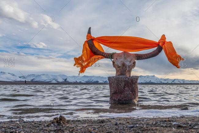 Yak skull and scarf. Namtso Lake, Tibet - 12 October 2014. Low angle