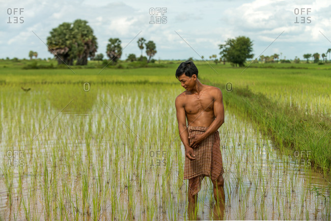 CAMBODIA - 2013 August 15: Local farmer checks paddy fields.