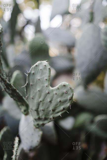 Cactus plant in a park