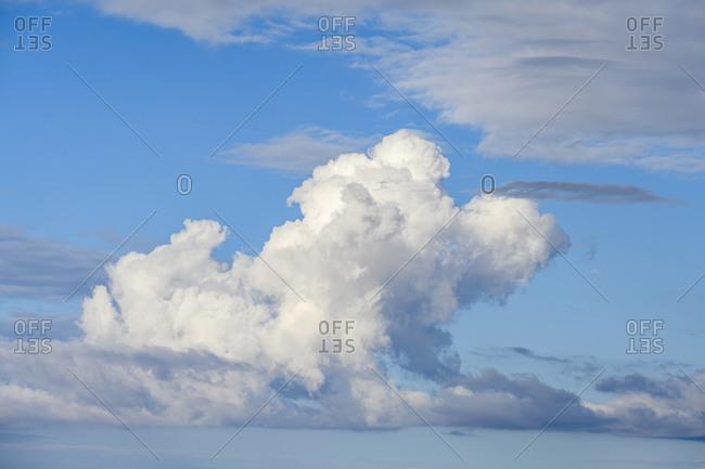 Whitecumulus clouds in the sky