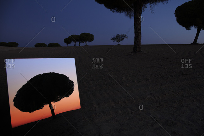 Shiny mirror reflecting silhouette of tree in Lagunas de Villafafila nature reserve at dusk