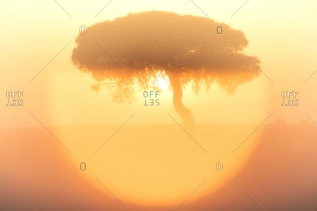 Setting sun illuminating silhouette of tree inLagunasdeVillafafilanature reserve