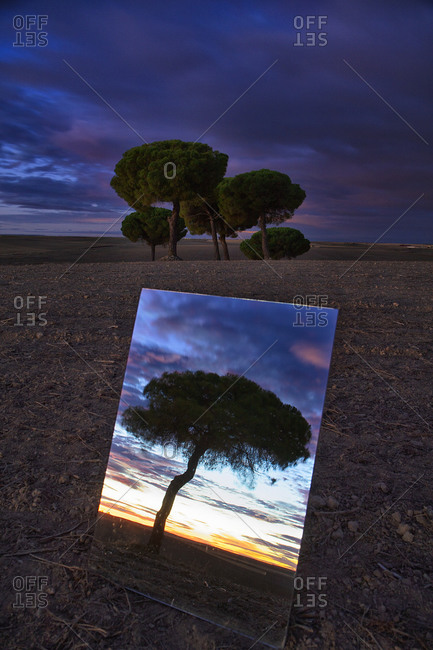 Shiny mirror reflecting tree in Lagunas de Villafafila nature reserve at dusk