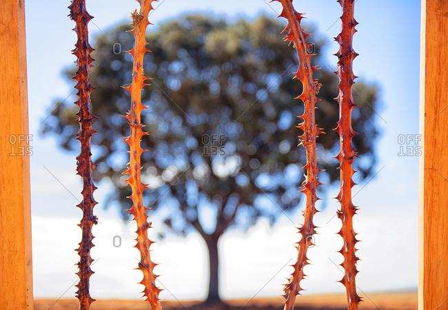 Visual metaphor of tree imprisoned by thorny stems in Lagunas de Villafafila nature reserve