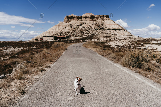 Spain- Navarre- Small dog standing in middle of empty road in BardenasReales
