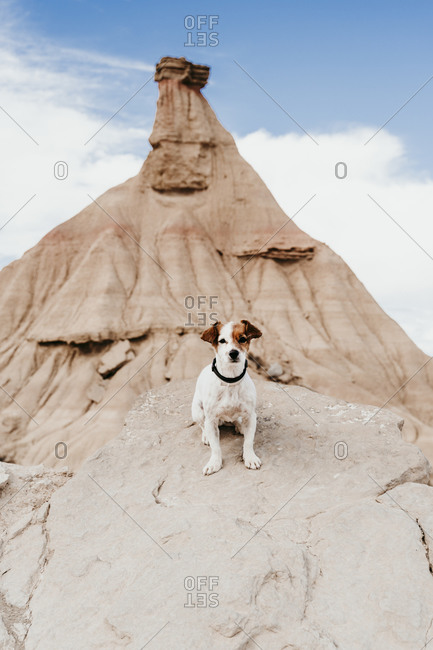 Spain- Navarre- Portrait of cute dog sitting in front of sandstone rock formation in Bardenas Reales