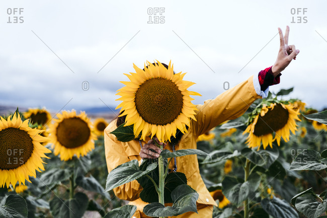 Young woman hiding behind sunflower in sunflower field