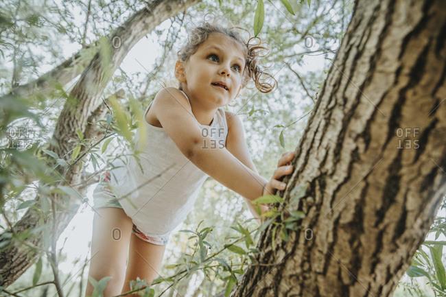 Little girl climbing willow tree