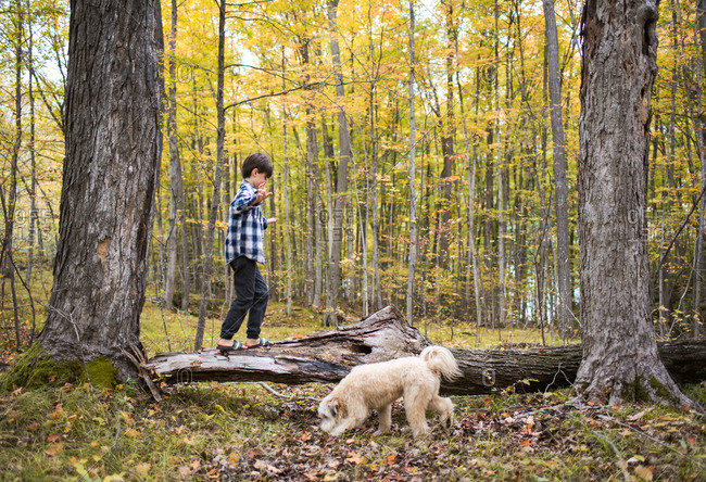 Young boy climbing on fallen tree in woods with his dog on fall day.