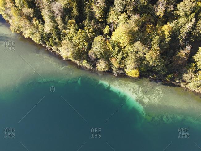 Aerial image of a piney coastline near a clear lake