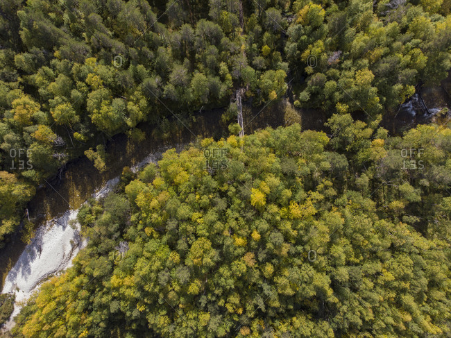Birdseye view of a grouping of trees in Norway