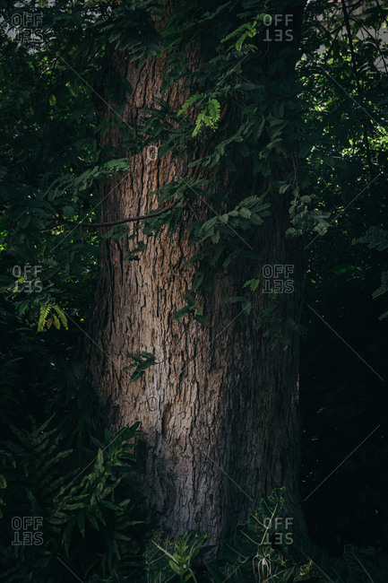 Giant tree trunk with rough green leaves in vertical background