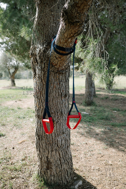 TRX sport team.  strap training ropes hanging on a tree