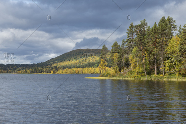 Autumn forest landscape surrounds lake Havggajavrre along Kungsleden Trail, Lapland, Sweden