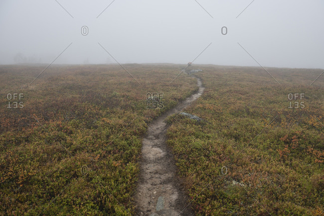 Single track trail heads into mist above the treeline on Kungsleden Trail, Lapland, Sweden