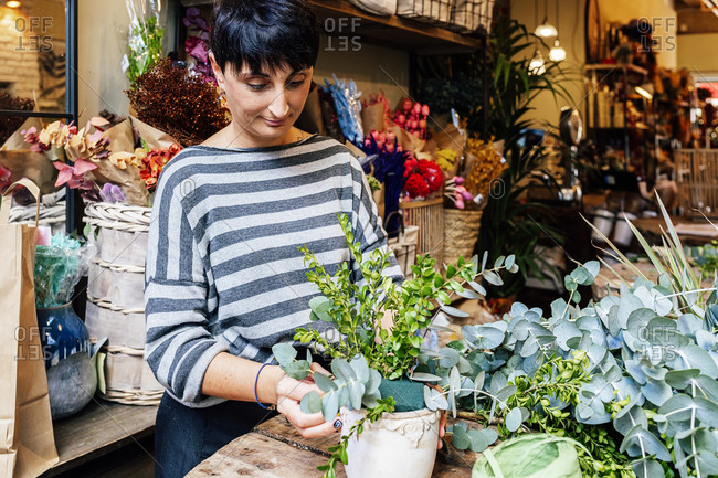 Professional female florist arranging  crassula succulent plants in ornamental ceramic pot while working in shop on wooden table