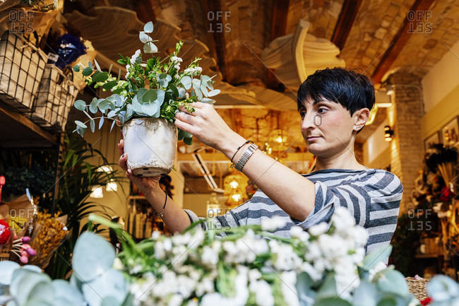 From below professional female florist arranging  crassula succulent plants in ornamental ceramic pot while working in shop on wooden table