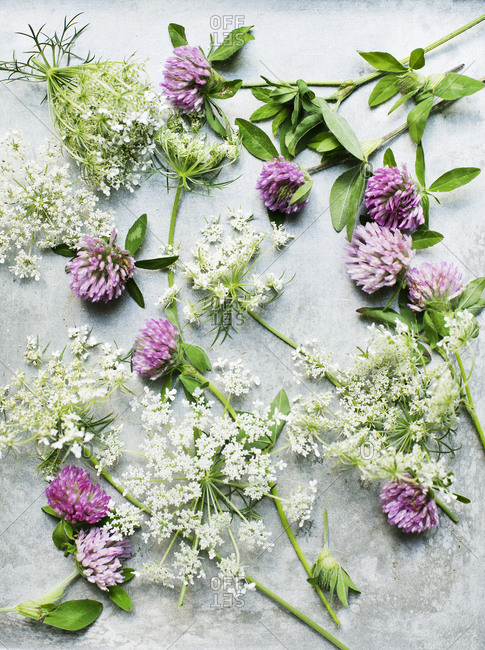 Overhead view of Wildflowers on light background