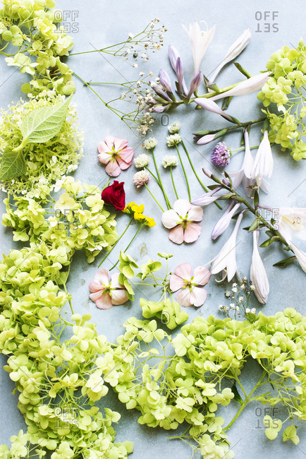 Variety of cut flowers on a light blue background