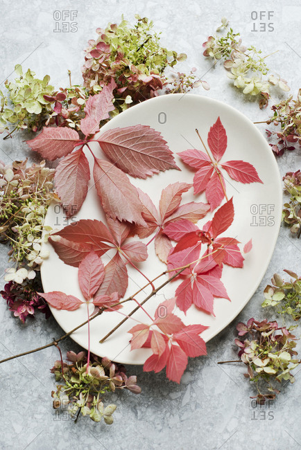 Autumn and flowers leaves on a ceramic plate