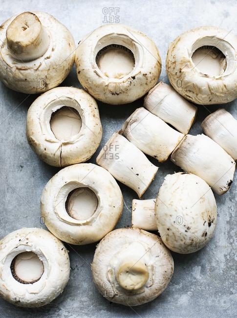 Caps and gills of white mushrooms