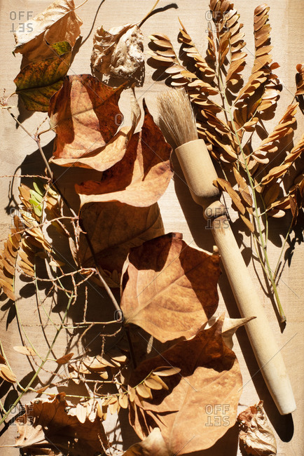 Still life of dried leaves in sunlight
