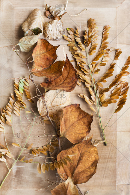 Still life of dried leaves on wooden table