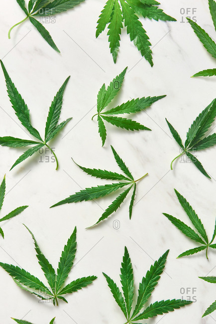 Pattern from organic leaves of medical cannabis plant.
