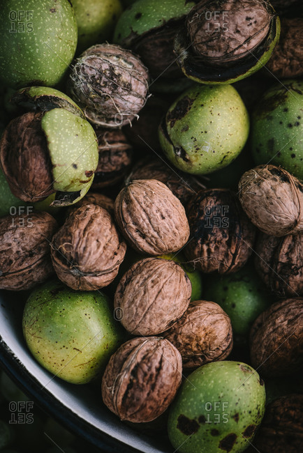 Freshly harvested walnuts in a bowl