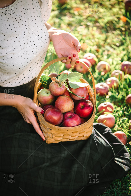 Woman holding a basket filled with fresh picked apples in an orchard