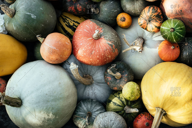 Variety of multicolored gourds and pumpkins