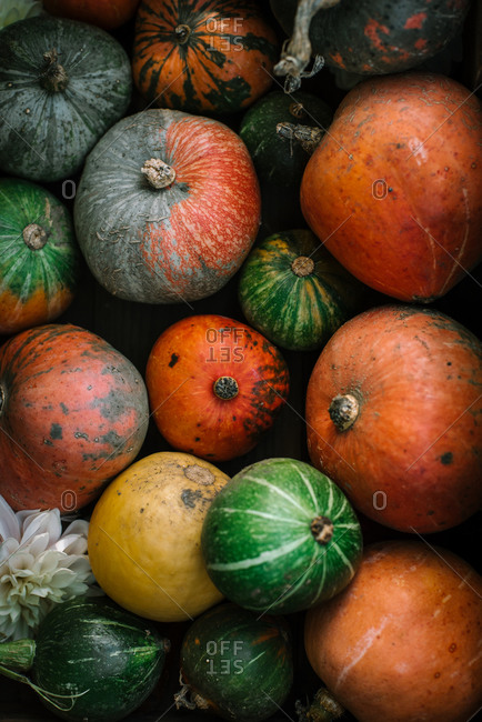 Overhead view of a variety of multicolored gourds and pumpkins
