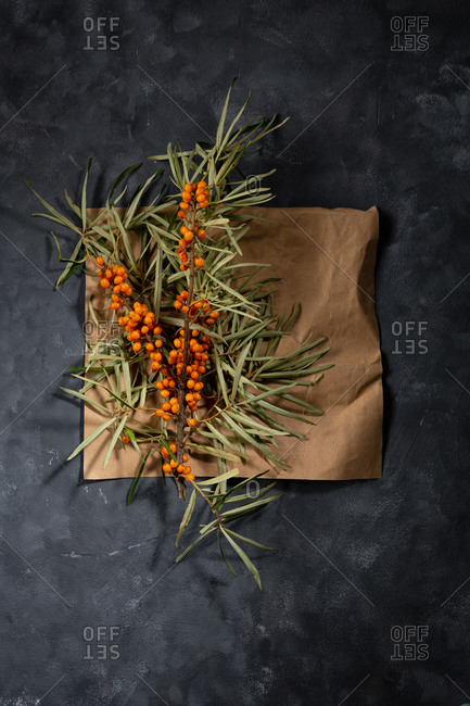 Two branches of sea buckthorn on craft paper