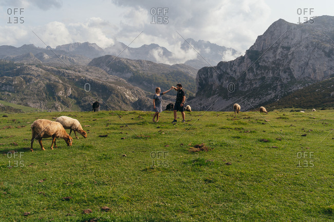 Side view full length loving couple wearing casual outfits bonding and dancing on lush lawn amidst domesticated sheep against majestic rocky mountains