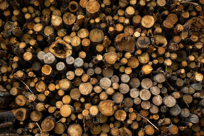 Pile of cut tree trunks and branches arranged together in forest as abstract background