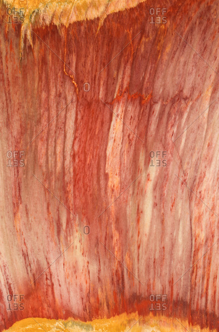 Close up photograph of the structural detail in a piece of sliced and polished petrified wood from Mexico