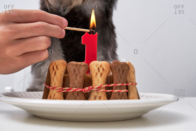 Unrecognizable crop owner lighting candle on tasty cake for dog at birthday party at home