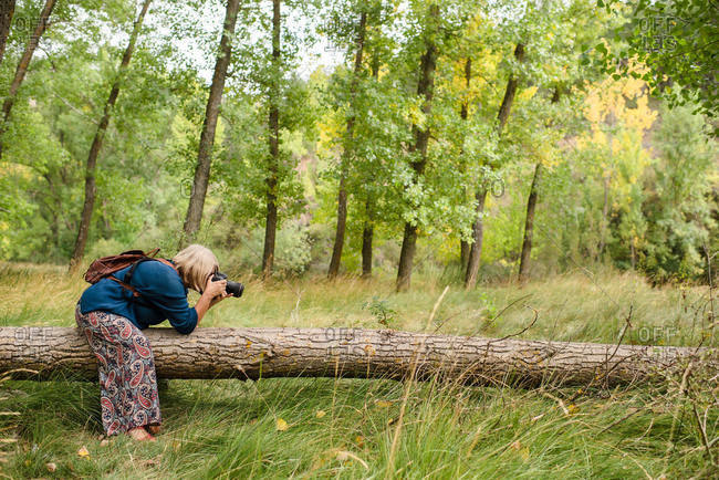 Side view of unrecognizable female photographer with photo camera capturing photos of old fallen pine tree in green forest